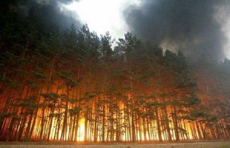 Rusiyada 217 nöqtədə meşə yanğını davam edir