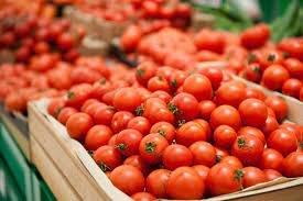 30 müəssisə Rusiyaya pomidor ixrac edə biləcək